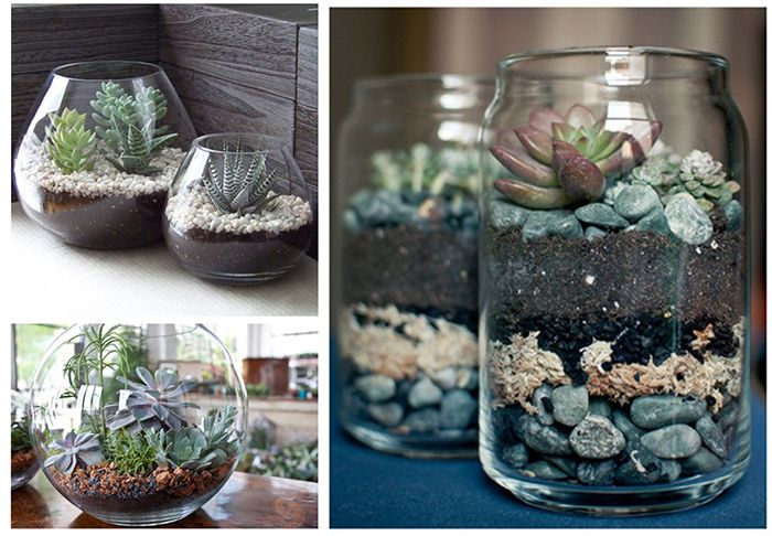 Macetas de vidrio para cactus buscar con google - Cactus en macetas pequenas ...