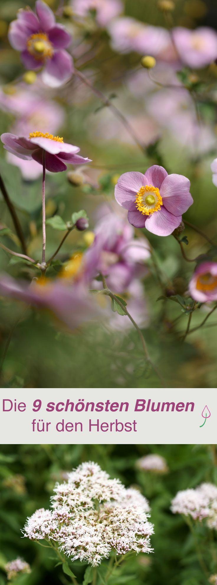 schones schone herbstblumen erfreuen unser auge im september grosse bild oder badfbbfdcc