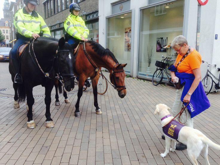 Toekomstige geleidehond Indra ontmoet de politie te paard
