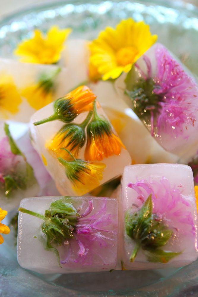 Herbal Flower Ice Cubes...hibiscus , schisandra , calendula & wild bergamot ice cubes.