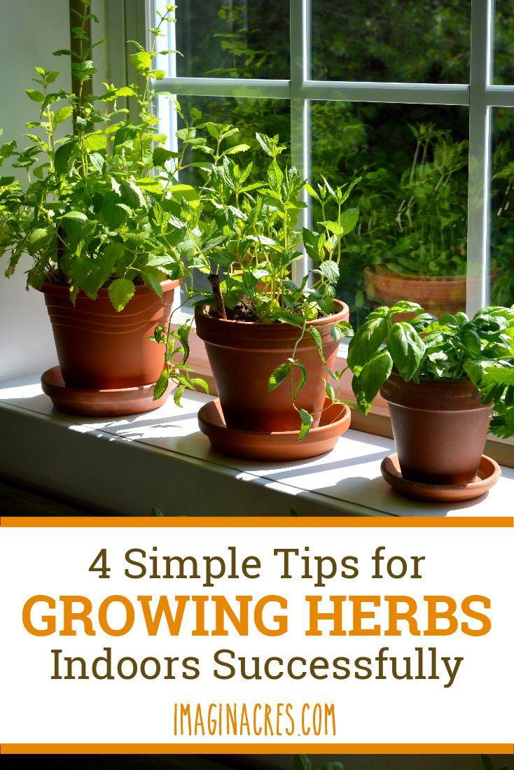 How To Grow A Windowsill Herb Garden Growing Herbs Indoors