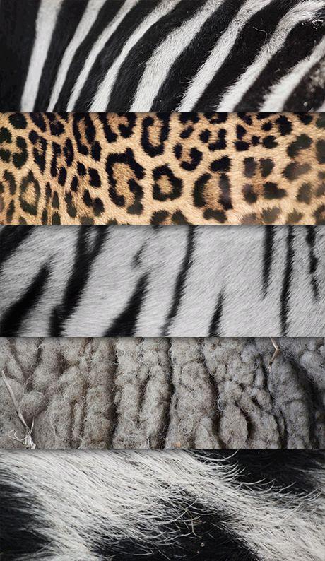 Hier zijn meerdere vachten met verschillende texturen, zoals vlekken en zacht.
