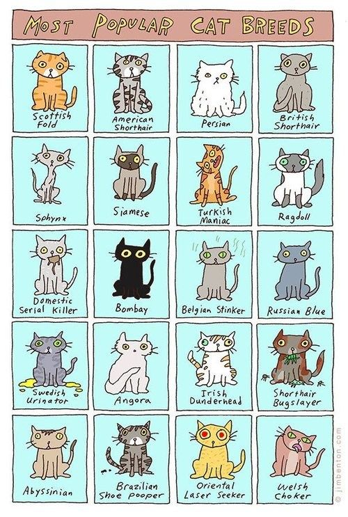 """The Most Popular Cat Breeds. I'm not 100%, but pretty sure one of my cats is a """"Swedish Urinator."""" lol."""