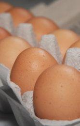 Dávate vajíčka do chladničky v kartóne? Keby ste tušili, čo tým spôsobíte, už to neurobíte | Čas pre ženy