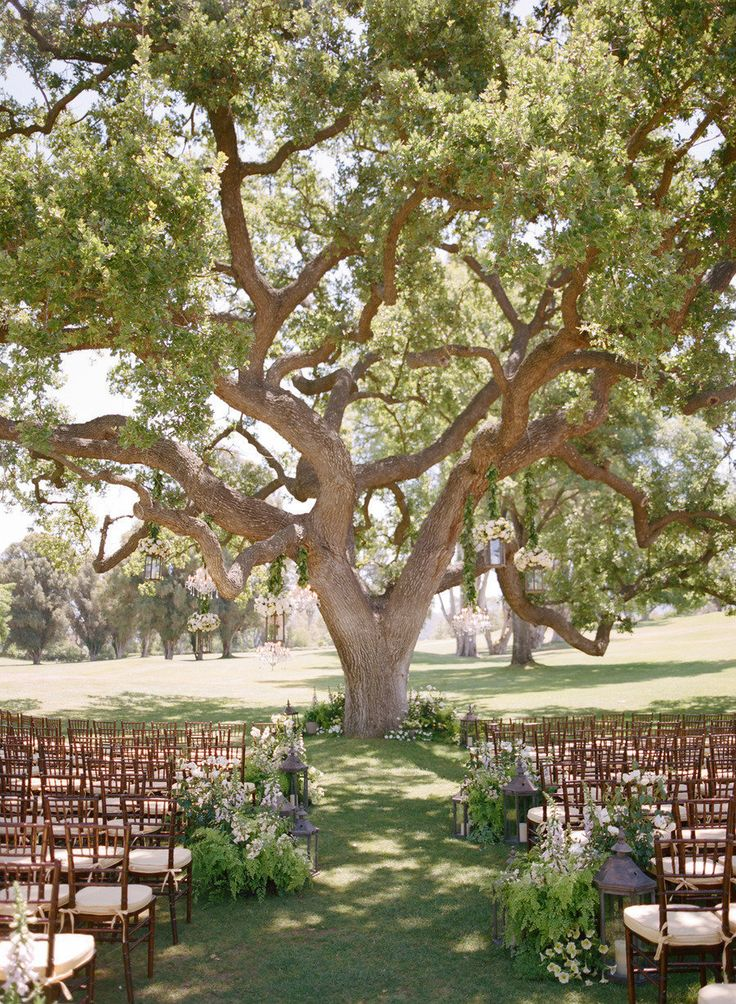 LOVE this tree...and love the natural look for the aisle. Hanging lanterns in the tree and placing them down the aisle adds just a little touch of structure to compliment nature.