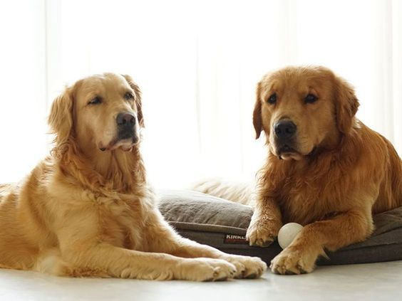 Mr N Mrs Pet Get Your Healthy And Purebred Puppy From Responsible