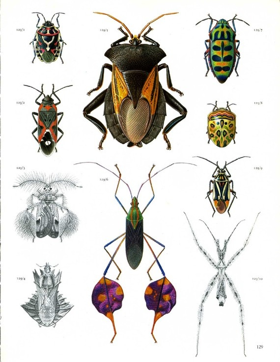 I love looking at these vintage insect illustrations. I should post them up all over my apt haha