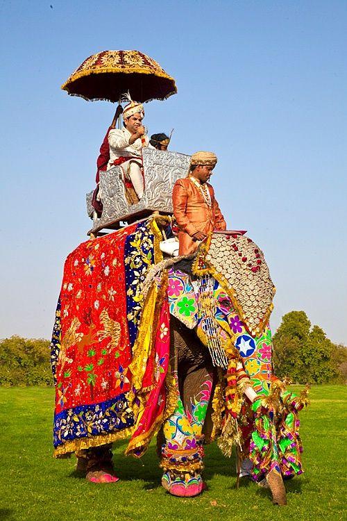Elephant festival, Jaipur, Rajasthan, India...photograph by Jim Zucherman