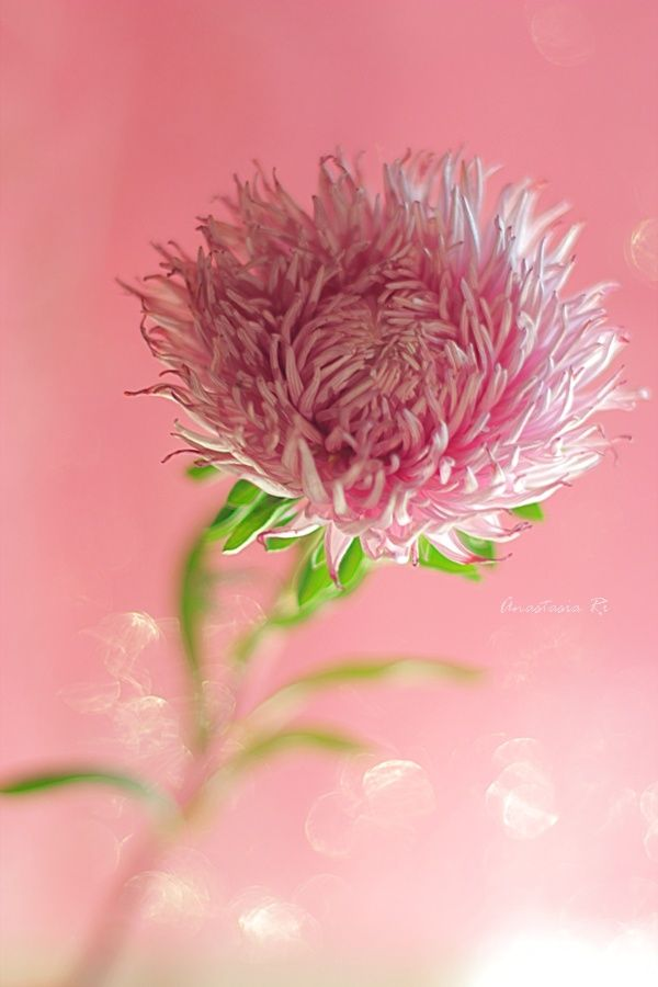58 Best Red Clover Images On Pinterest  Farms, The Farm -3949