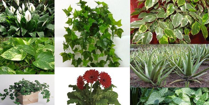 A legerősebb méregtelenítő, légtisztító szobanövények - Egészségtér - Természetes egészség