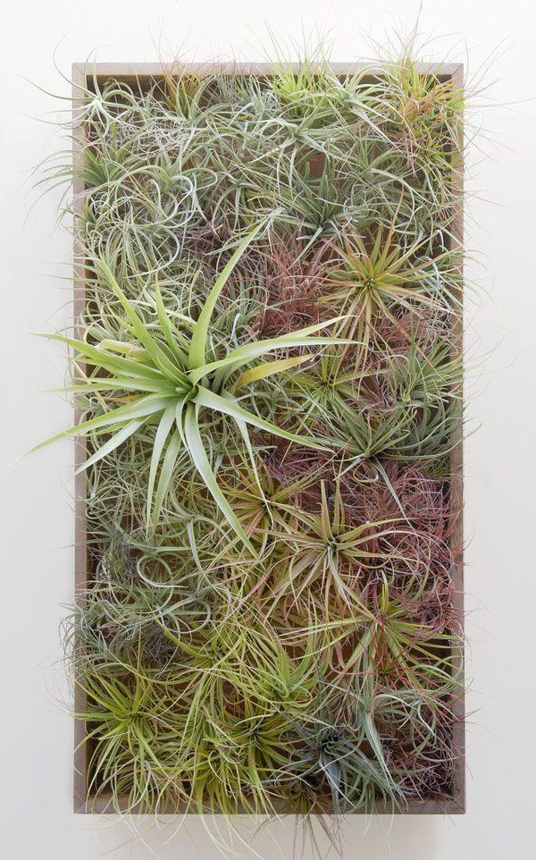 Vertical garden created by Flora Grubb Gardens made entirely of tillandsias