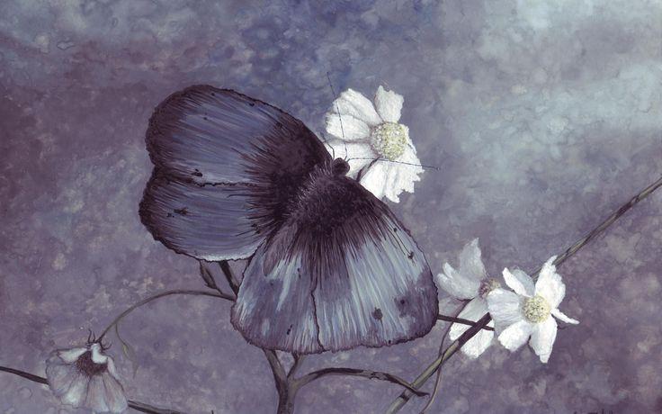 ромашки, рисунок, бабочка, синяя, цвет фото