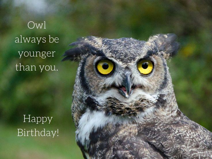 Birthday Owl Photo Greeting Card, 4x5 birthday cards blank inside, funny humor…