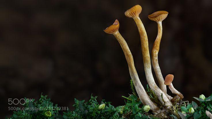 Mushrooms (Roland Albanese / Winterthur / Schweiz) #E-M1MarkII #macro #photo #insect #nature