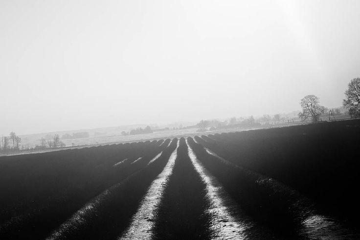 """Somewhere between Warsaw and Riga"" series  Bus trip Poland - Latvia 2017 Jordi NN . . . #Poland #lithuania #latvia #bustrip #busview #landscape #blackandwhite #bnw #blackandwhitephotography #photography #monochrome #2017 #JordiNN #fields"