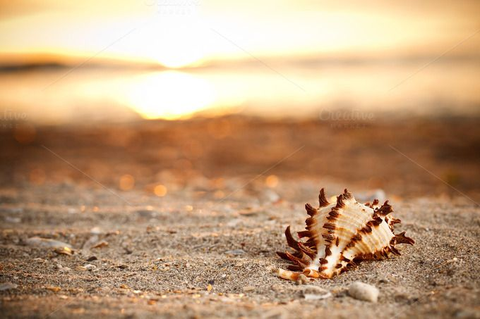Shell on the beach by Grafvision photography on Creative Market