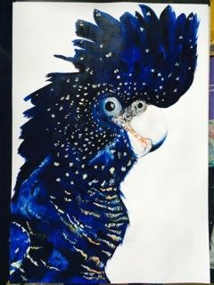 Black Cockatoo cocky Print of the original, painted in Acrylic. A3 in size | Hand signed &  numbered | Limited Edition of 50 only