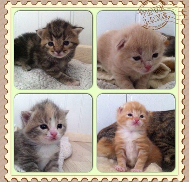 Våres fire små kattunger som alle har flyttet ut i den store verden.