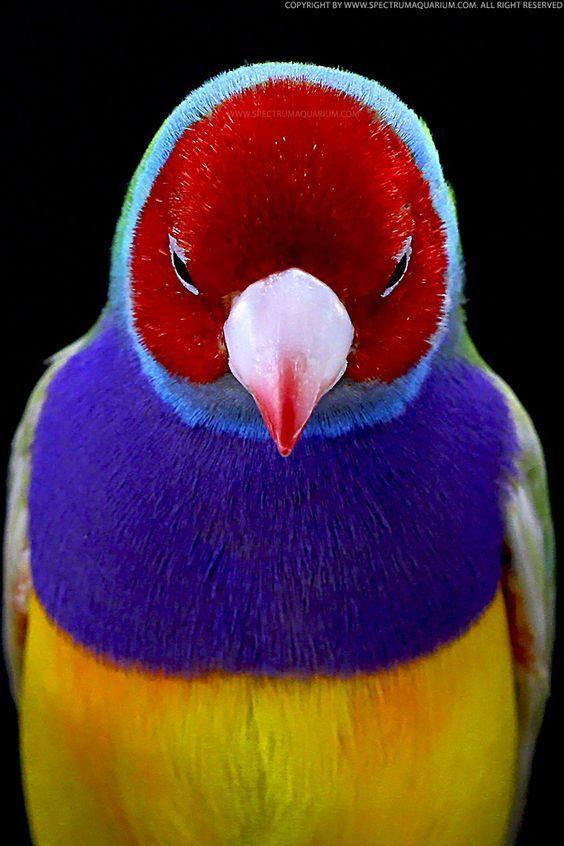 1405 best BIRDS PLANET images on Pinterest Animal kingdom