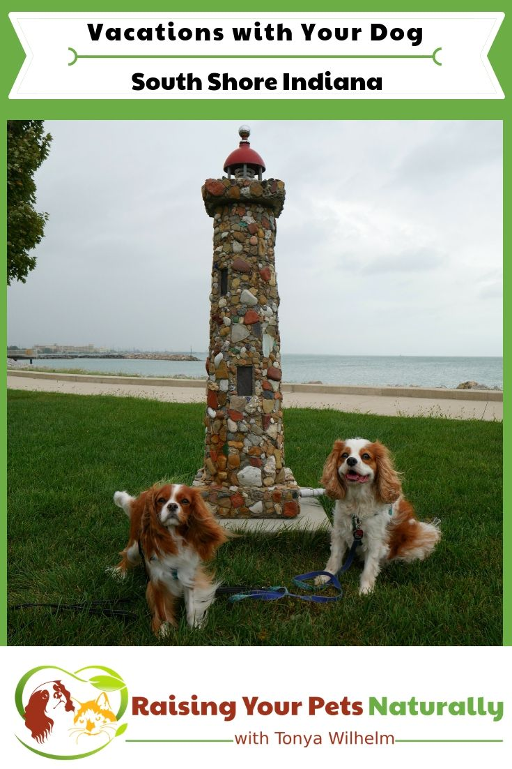 Traveling With Dogs In Northern Indiana Blog Shares Dog Travel