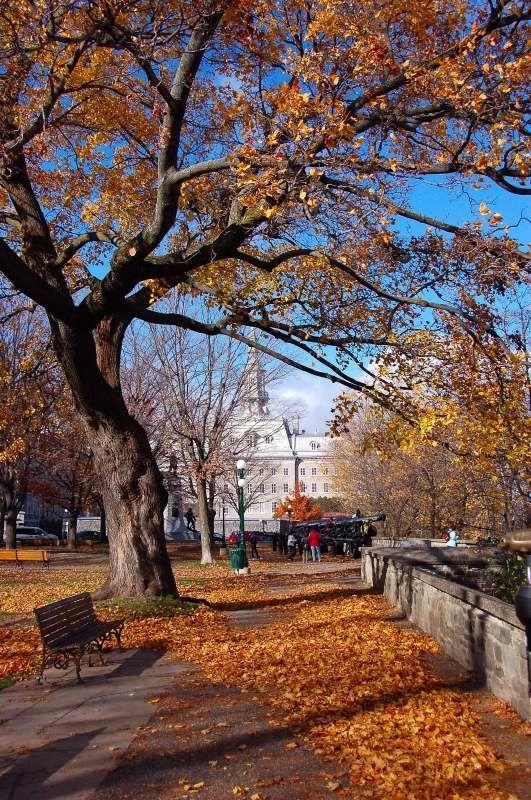 Autumn, Park Montmorency, Quebec, Canada Copyright: Alain Hebert