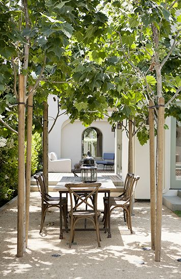 Tree archway over an outdoor dining area.