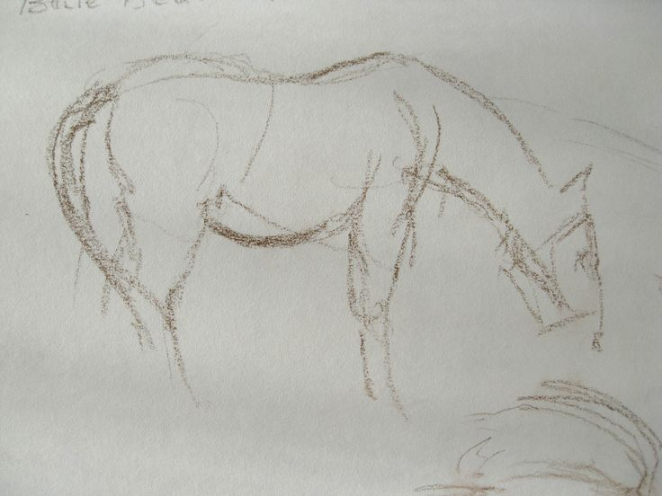 Horse at its feed, quick location sketch by LKrahn Muenster