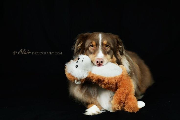 precious treasures dog training reviews
