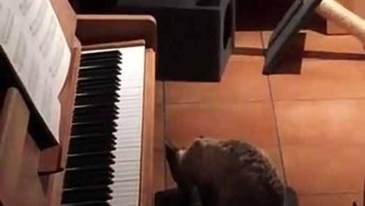 Un Chat étonné en train de Jouer du Piano - http://www.newstube.fr/un-chat-etonne-en-train-de-jouer-du-piano/ #Cat, #Chat, #ChatPiano, #Paino