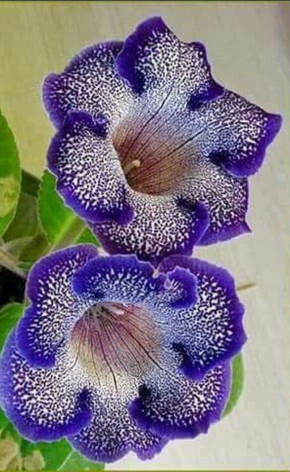 Amazing Unusual Plants To Grow In Your Garden Unusual Flowers Beautiful Flowers Strange Flowers
