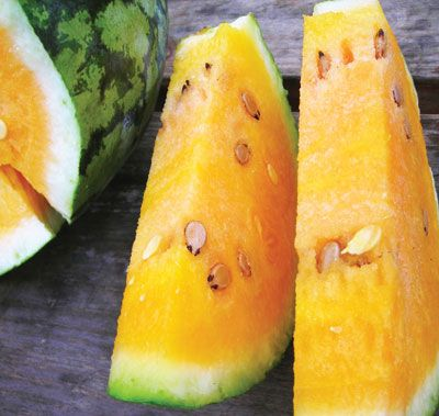 OrangeGlo WATERMELON 3 g - 85 days. One of the best orange-flesh watermelons. Solid deep orange flesh that is very crisp, very sweet, and very flavorful. Vigorous plant produces heavy yields of 25-lb melons with light and dark green stripes.