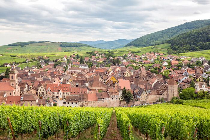 The Story Behind Crémant d'Alsace | Wine Enthusiast Magazine