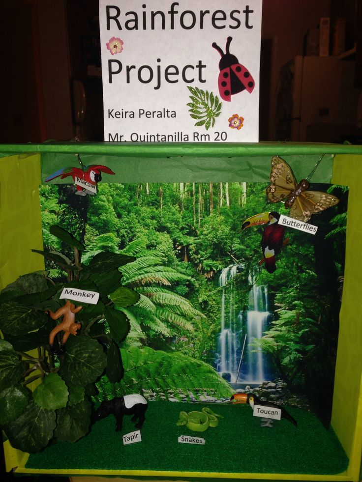 rainforest project Science projects often require taking a concept you have learned in class and applying your understanding with visual props for science students interested in creating a rain forest, there are many ways to depict this natural scene.