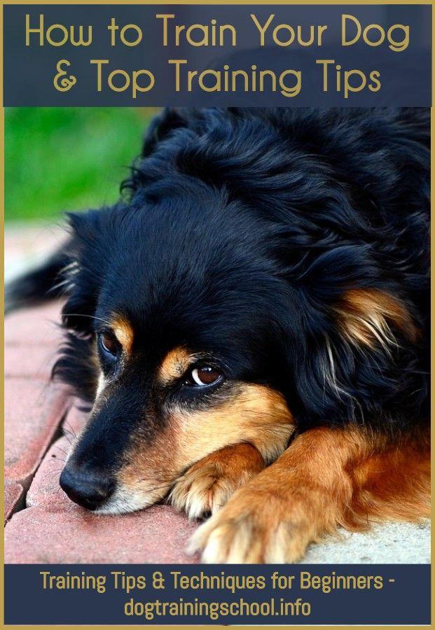 Dog Training Warwickshire With Images Dog Training Near Me Basic Dog Training Dog Training Methods