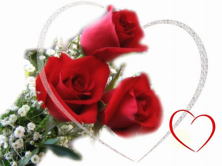41 best images about Flowers – Most Beautiful Valentine Cards
