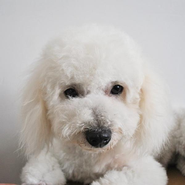 Soplo cardíaco en perros - Síntomas y tratamiento