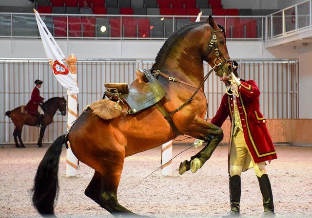 Portuguese School of Equestrian Art Things to do in #Lisbon #Portugal