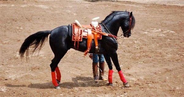 caballos aztecas   Caballos   Pinterest