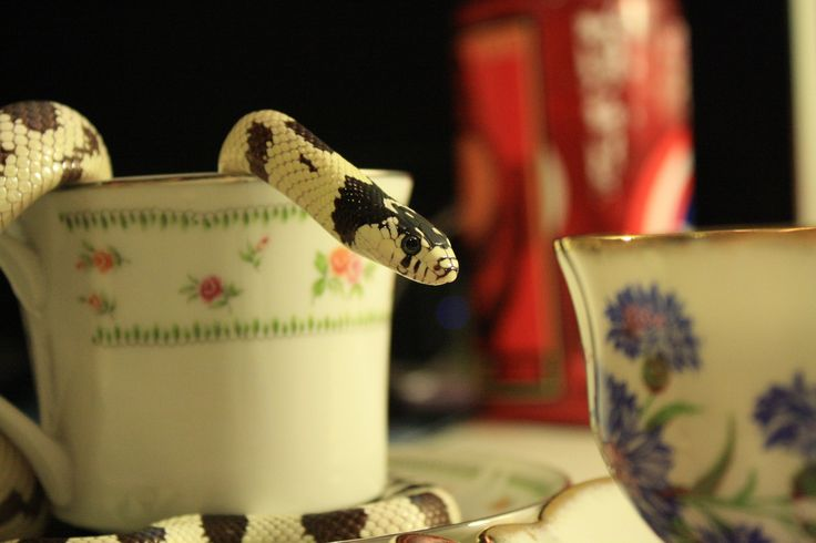 Teacups and Trance.    (Tea was cold-brewed Lady Grey steeped for 30 seconds).    (source: crisscrosscutout.tumblr.com)