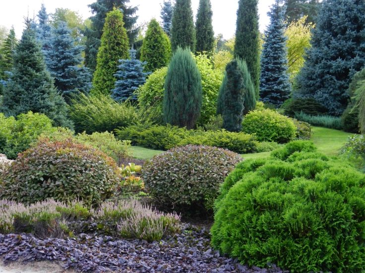 site full of conifer garden pictures love