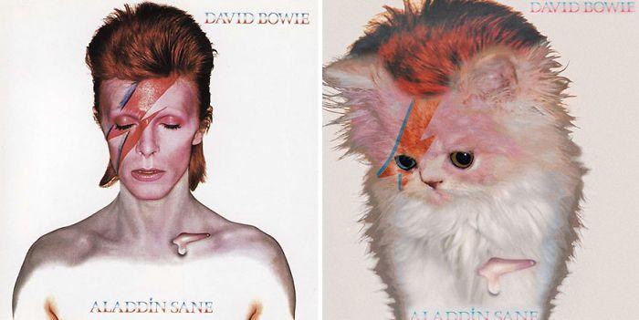 Dit is wel een hele leuke verandering - Covers van bekende cd's vervangen door katten