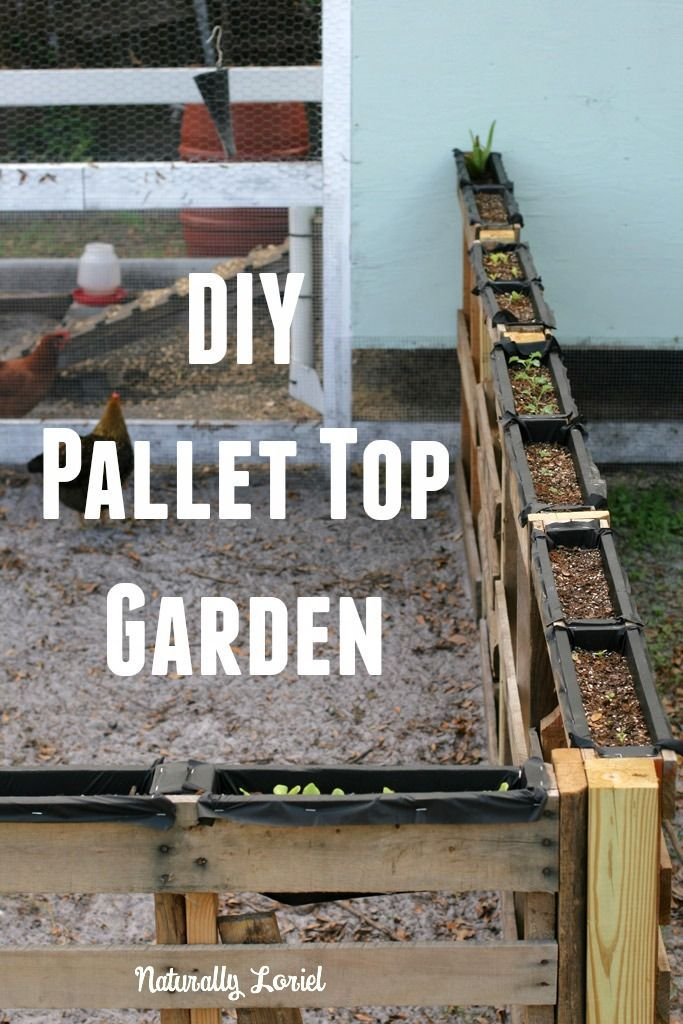 I love the idea of vertical gardening so I turned my extended pallet chicken run into a DIY pallet top garden to make the most of my space. Learn more here!