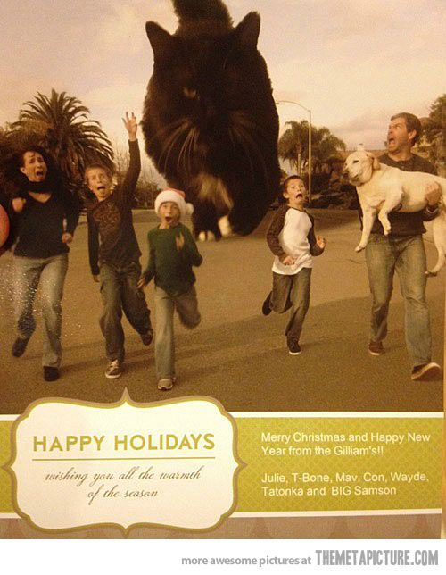 Best Family Happy Holidays Card Baby Cats cute cats| http://best-baby-cute-little-cats.blogspot.com