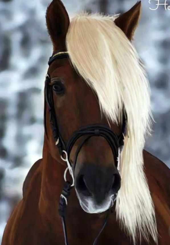 Really Pretty Makeup: 10 Best Really Pretty Horses Images On Pinterest