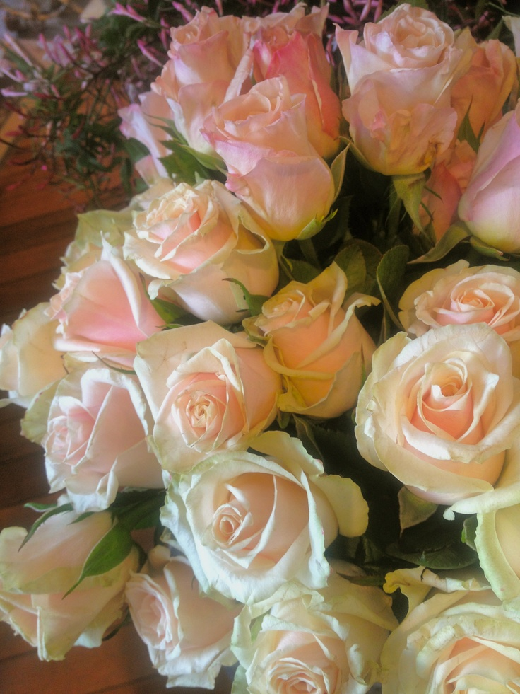blush roses- dusty miller designs