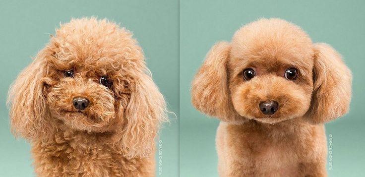 Köpek fotoğraflarına sabaha kadar bakabiliriz. Ama bu kadar tatlı köpeği hiç bir arada görmüş müydünüz