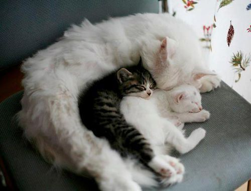 OMGMothers, Spoons, Pets, Mornings Coffe, Sweets Dreams, Kittens, Cat Trees, Kitty, Animal