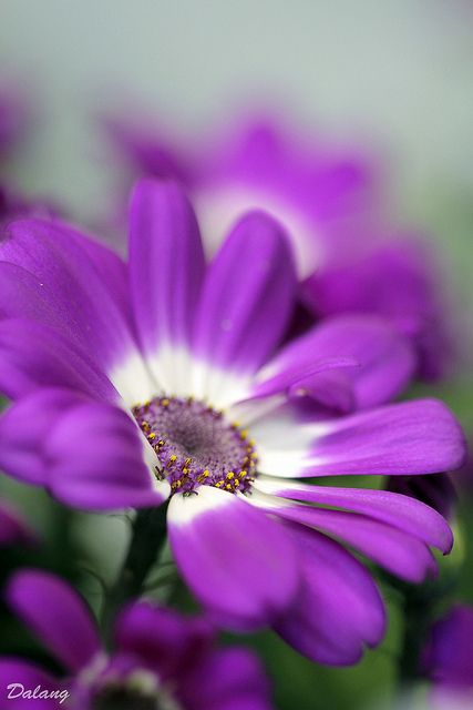 ~~Purple flower by Dalang55555~~