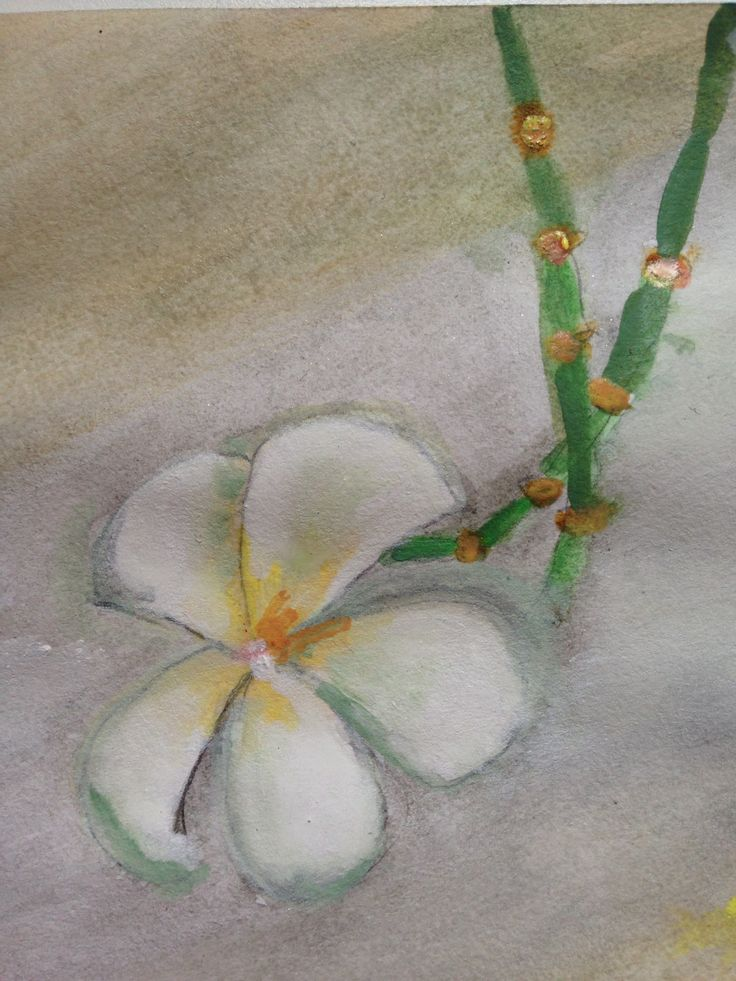 Water colour flower 2nd day of art