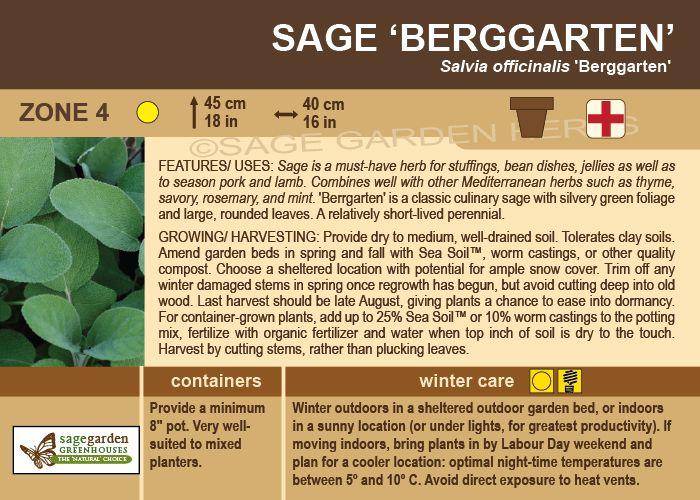 Sage Garden - Sage, Berrgarten